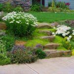 Садовая ромашка в дизайне