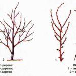 Формирование вишни