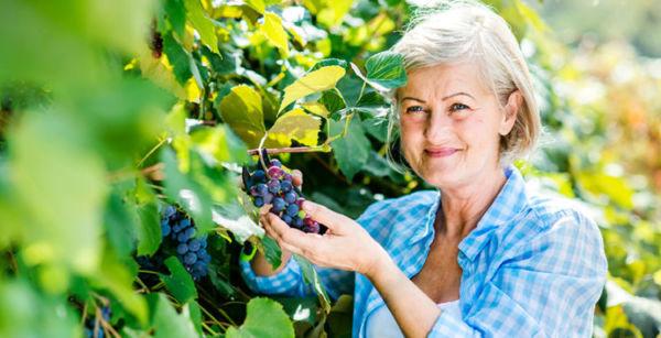 Нужна ли пересадка винограда на новое место осенью – польза и вред процедуры