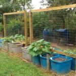 Выращивание тыквы с опорой