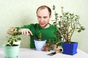 Мужчина сажает денежное дерево