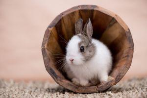 Декоративный кролик в деревянном ведре